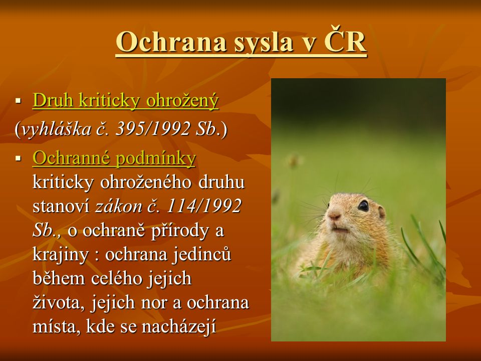 Ochrana sysla v ČR Druh kriticky ohrožený (vyhláška č. 395/1992 Sb.)