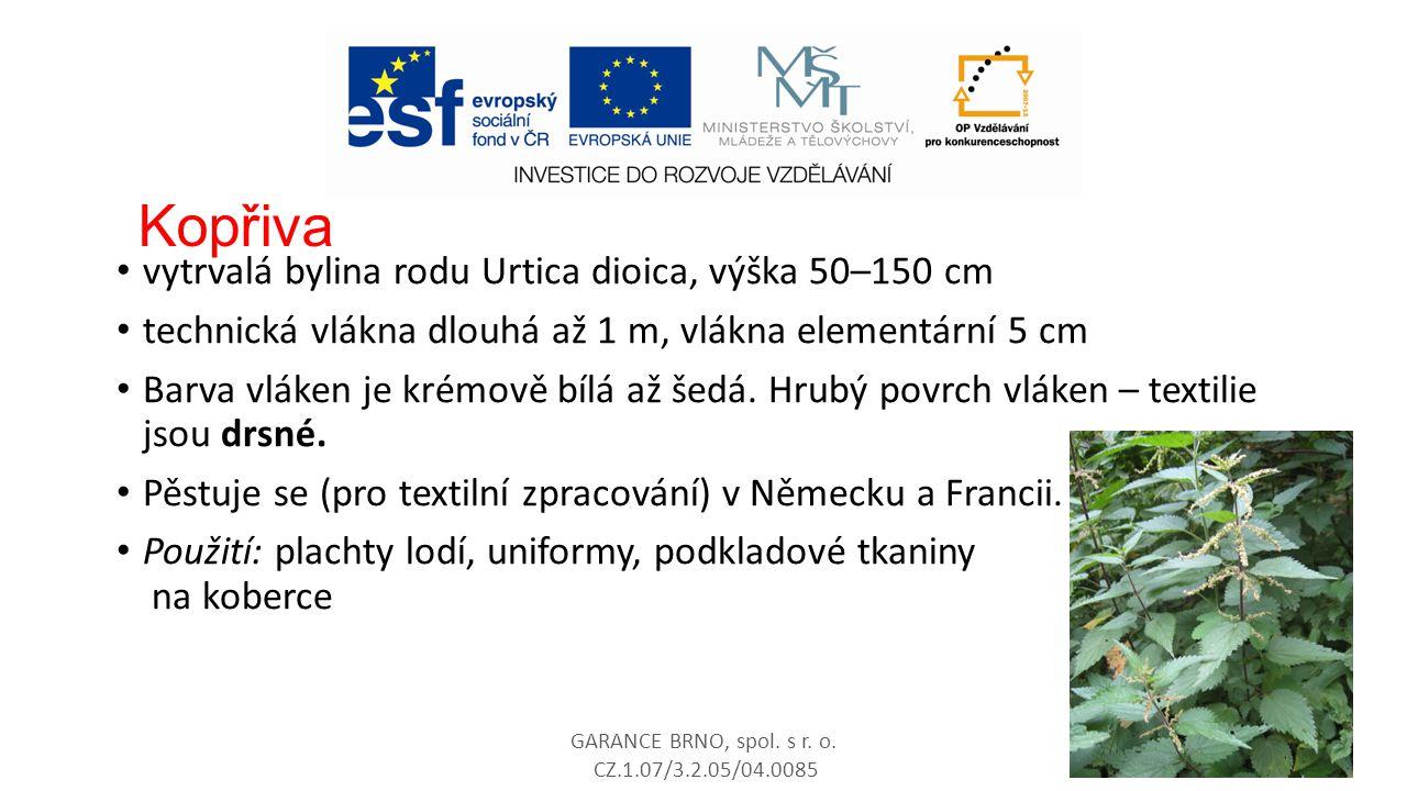Kopřiva vytrvalá bylina rodu Urtica dioica, výška 50–150 cm