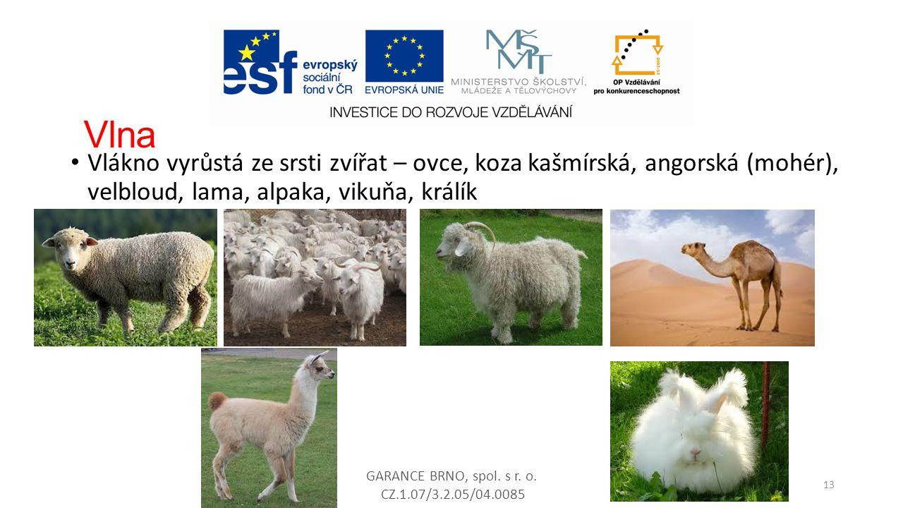 Vlna Vlákno vyrůstá ze srsti zvířat – ovce, koza kašmírská, angorská (mohér), velbloud, lama, alpaka, vikuňa, králík.