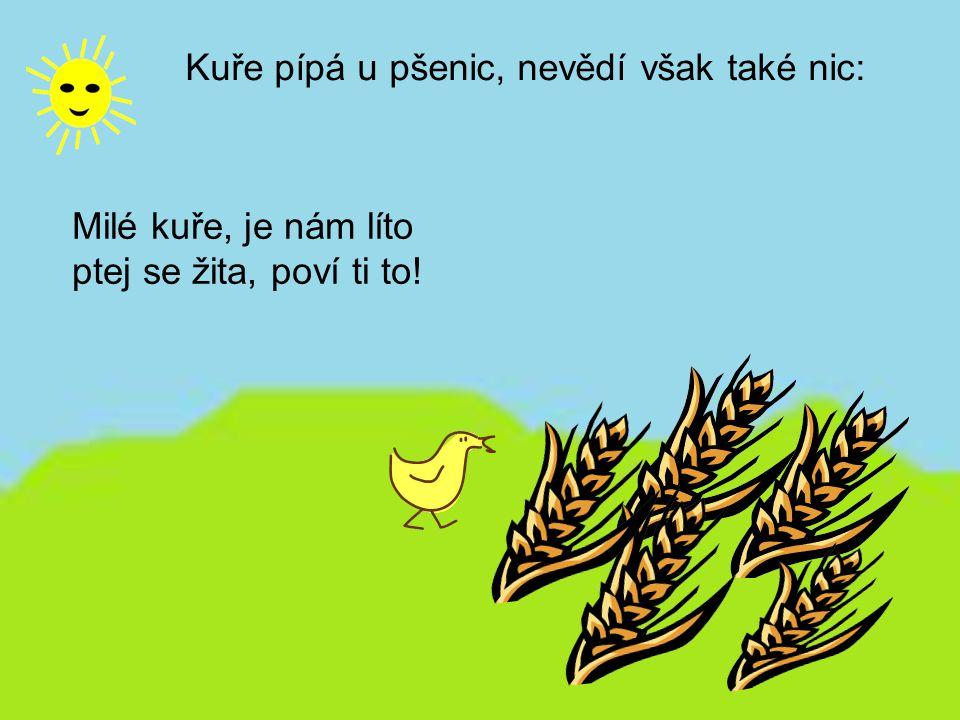 Kuře pípá u pšenic, nevědí však také nic: