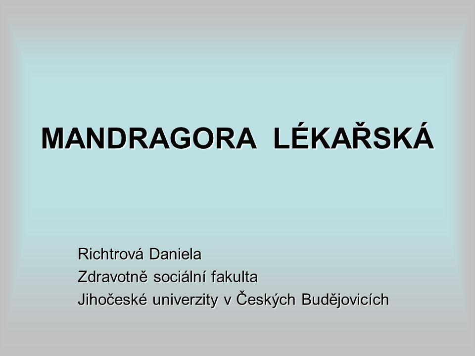 MANDRAGORA LÉKAŘSKÁ Richtrová Daniela Zdravotně sociální fakulta