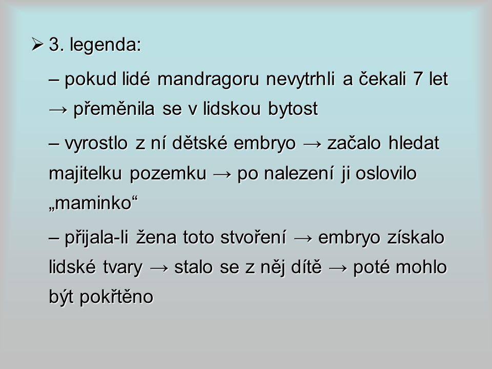 3. legenda: – pokud lidé mandragoru nevytrhli a čekali 7 let → přeměnila se v lidskou bytost.