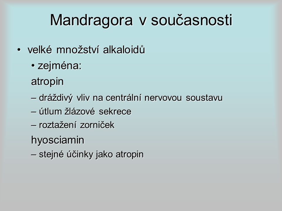 Mandragora v současnosti