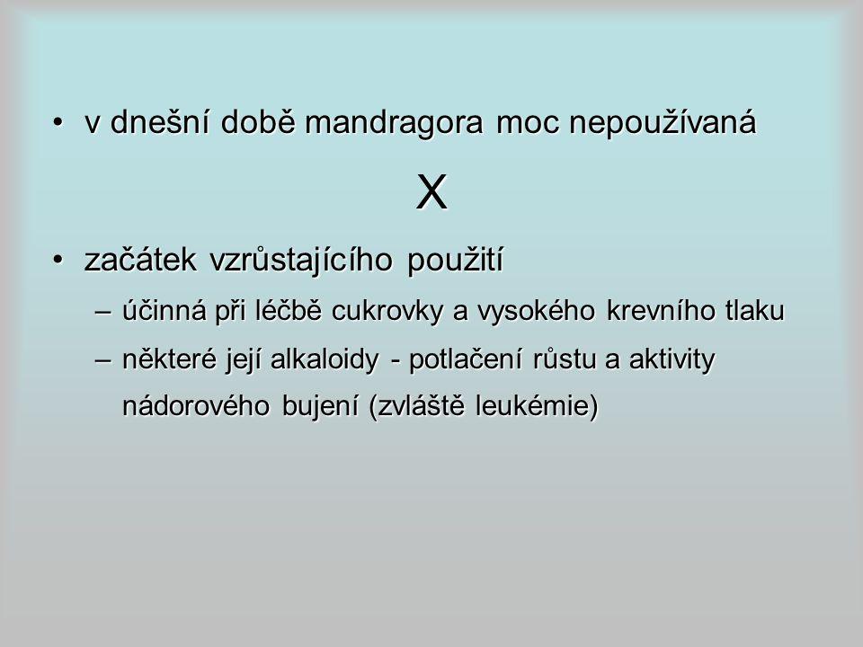 X v dnešní době mandragora moc nepoužívaná