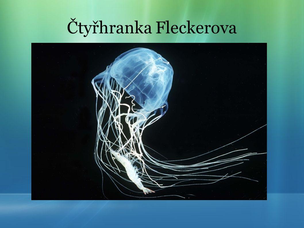 Čtyřhranka Fleckerova