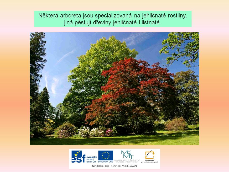 Některá arboreta jsou specializovaná na jehličnaté rostliny,
