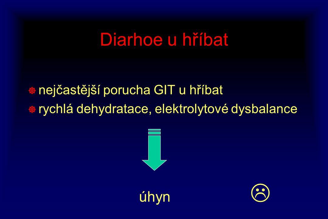 Diarhoe u hříbat nejčastější porucha GIT u hříbat