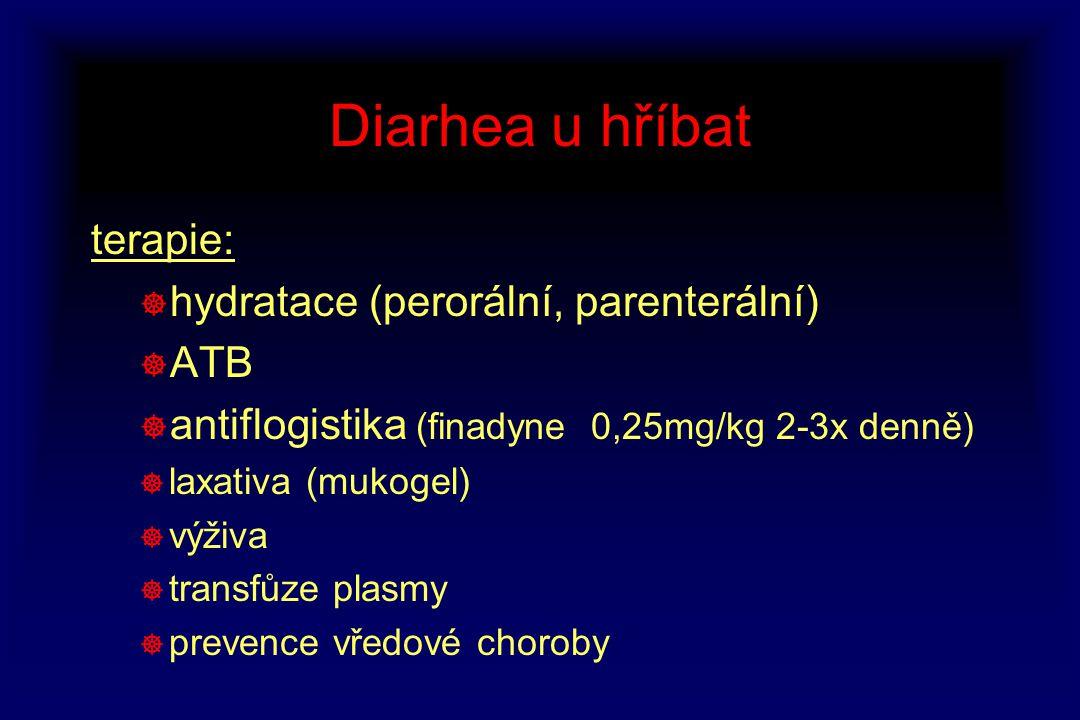 Diarhea u hříbat terapie: hydratace (perorální, parenterální) ATB