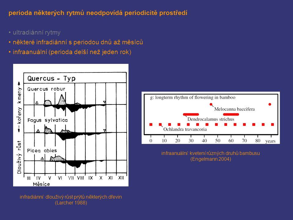 perioda některých rytmů neodpovídá periodicitě prostředí
