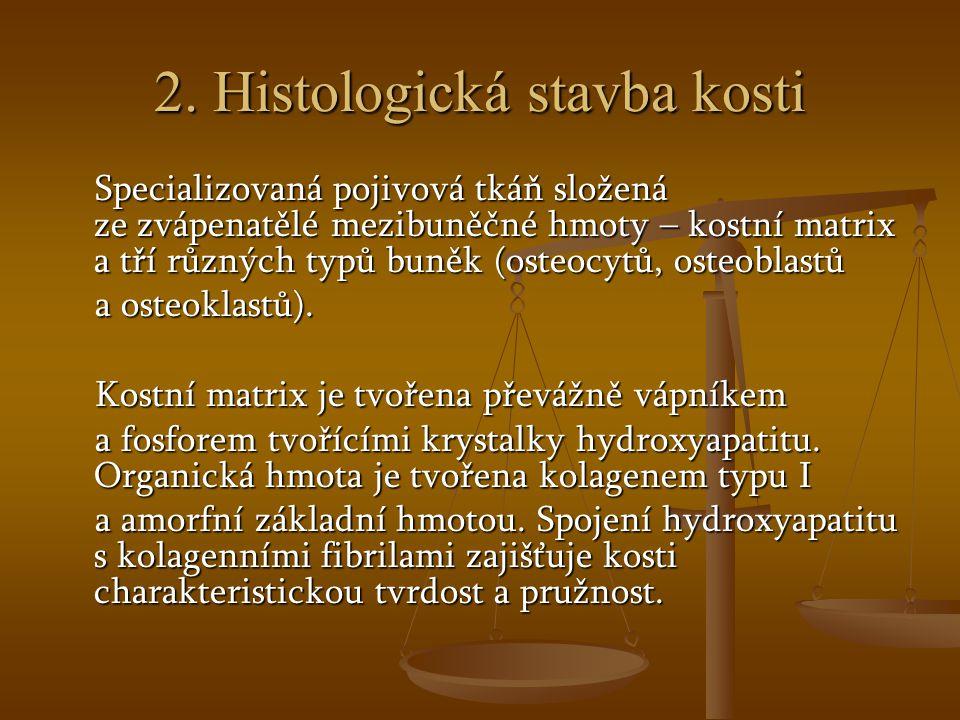 2. Histologická stavba kosti