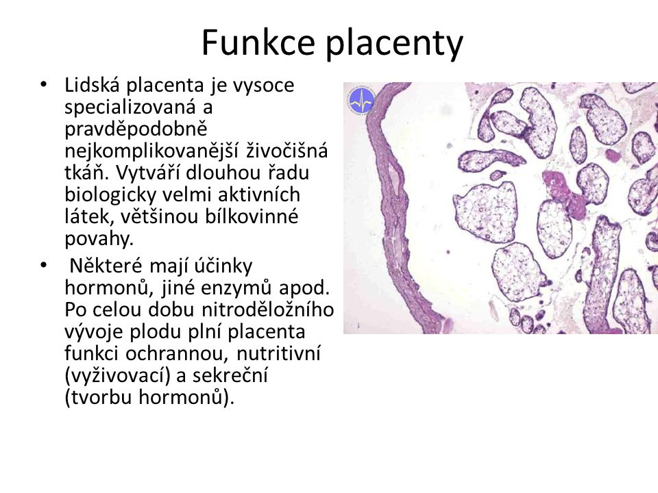 Funkce placenty
