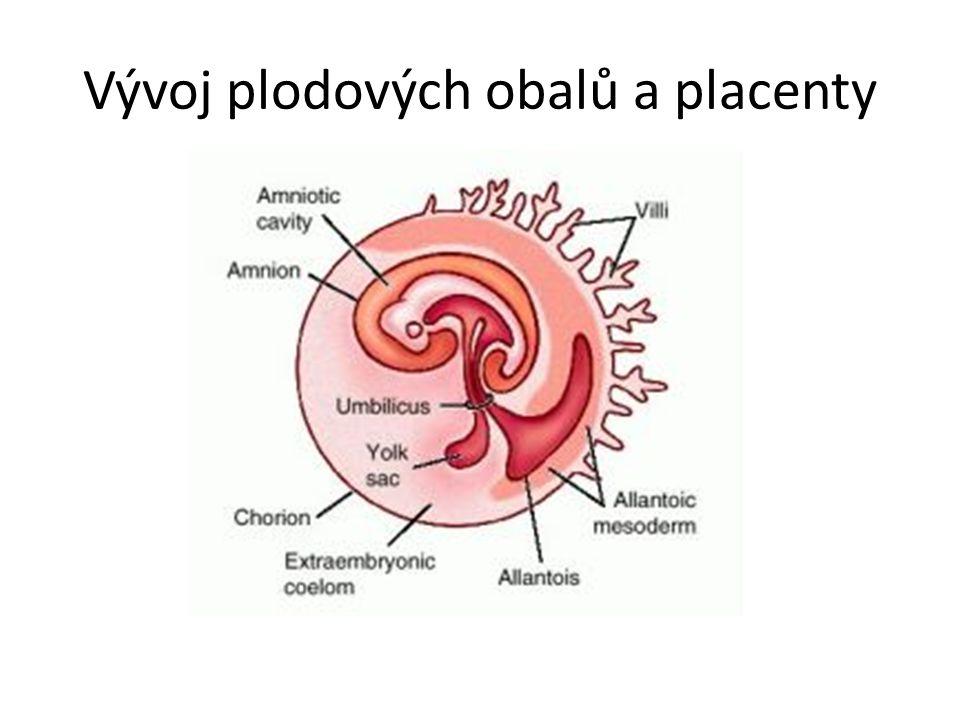 Vývoj plodových obalů a placenty