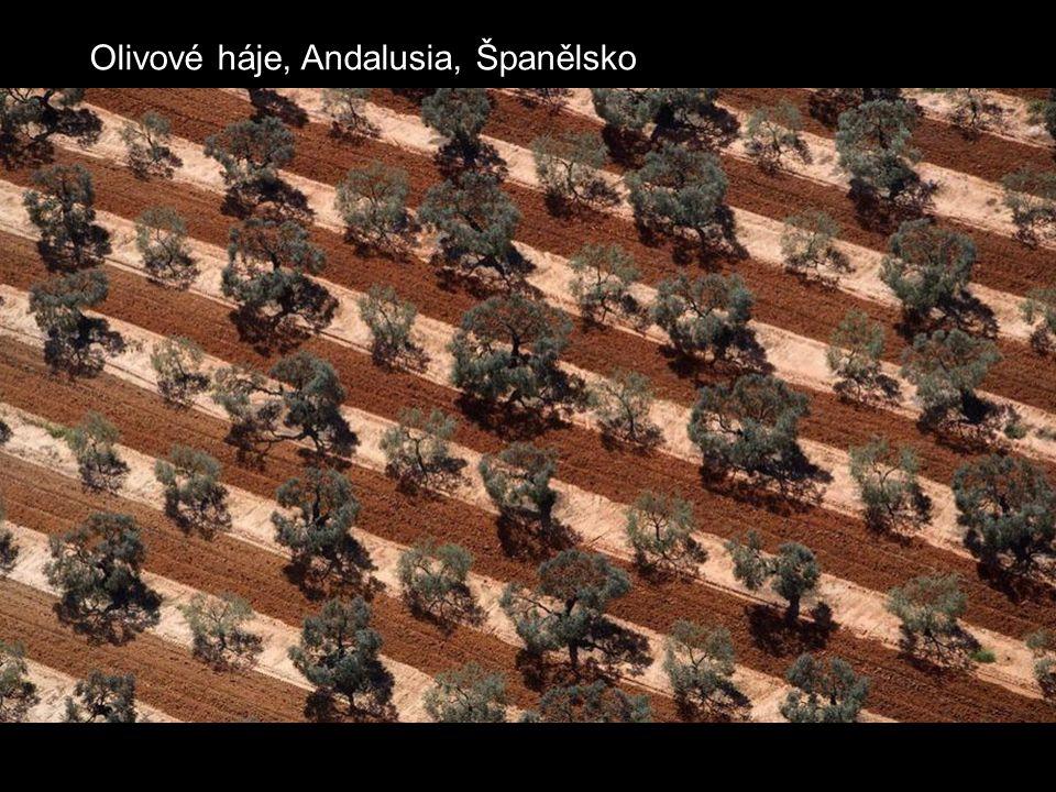 Olivové háje, Andalusia, Španělsko