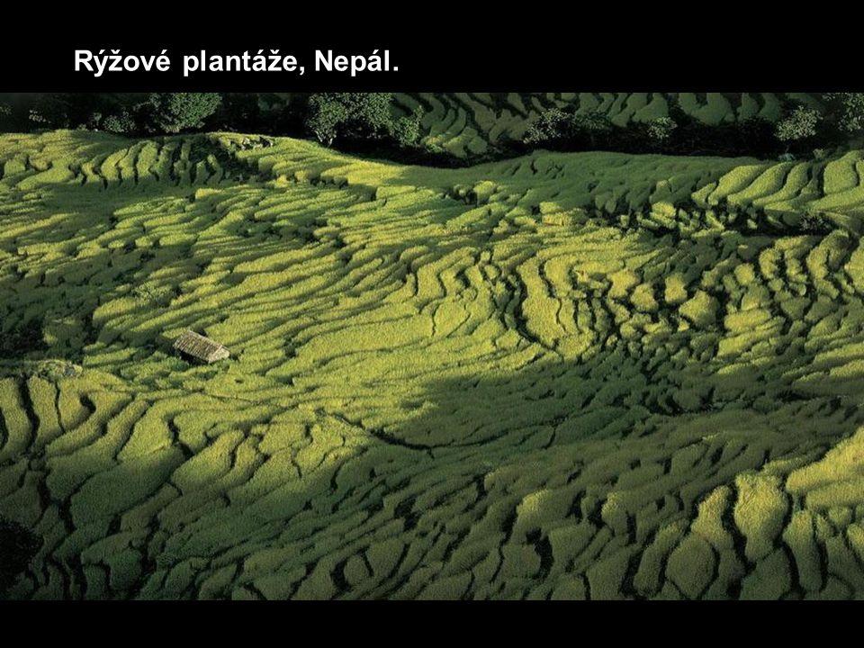 Rýžové plantáže, Nepál.