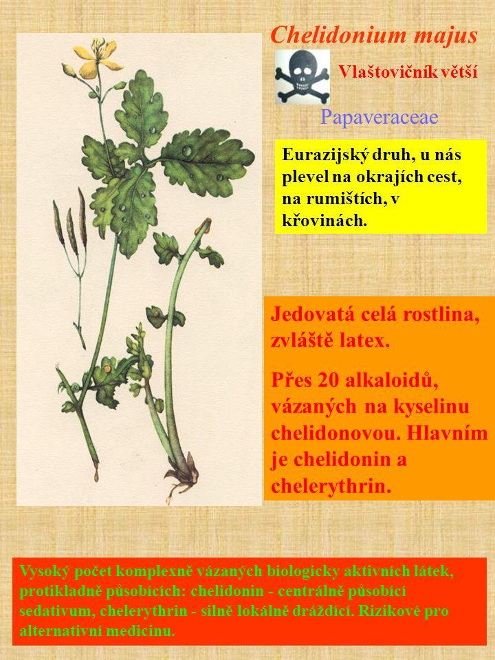 Chelidonium majus Papaveraceae Jedovatá celá rostlina, zvláště latex.