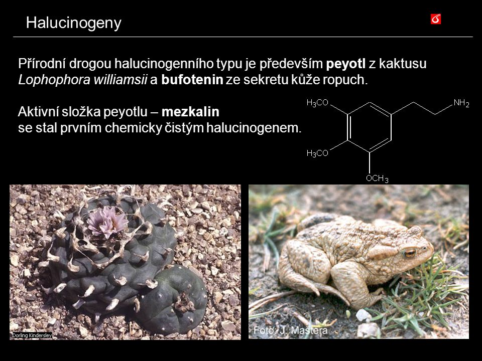 Halucinogeny Přírodní drogou halucinogenního typu je především peyotl z kaktusu Lophophora williamsii a bufotenin ze sekretu kůže ropuch.