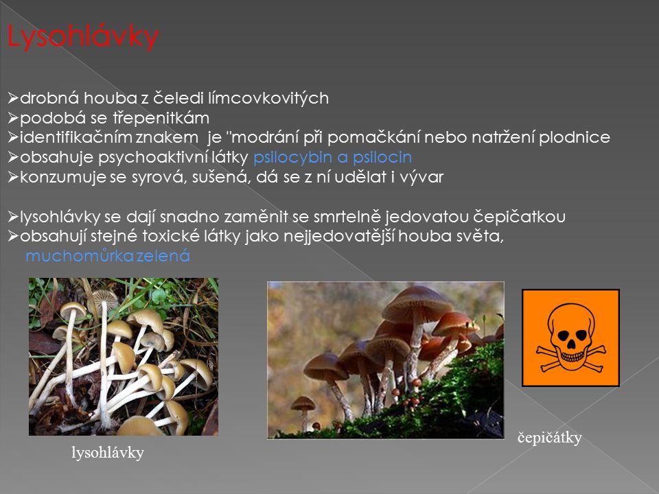 Lysohlávky drobná houba z čeledi límcovkovitých podobá se třepenitkám