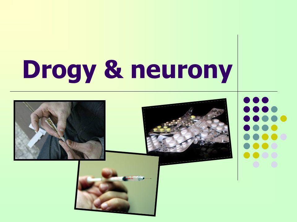 Drogy & neurony