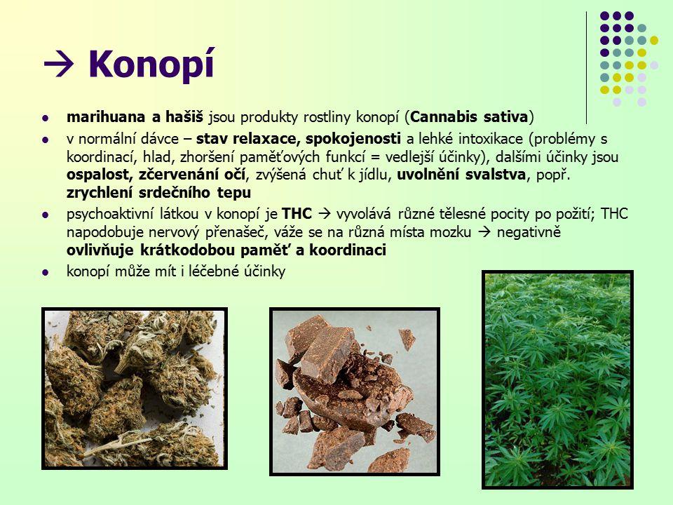  Konopí marihuana a hašiš jsou produkty rostliny konopí (Cannabis sativa)