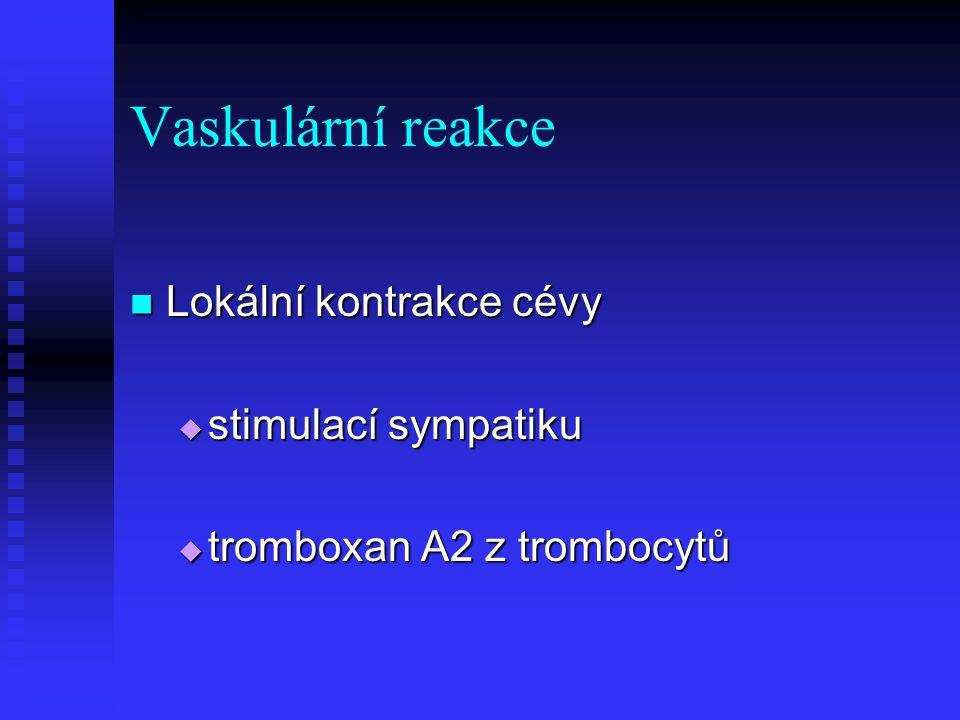 Vaskulární reakce Lokální kontrakce cévy stimulací sympatiku