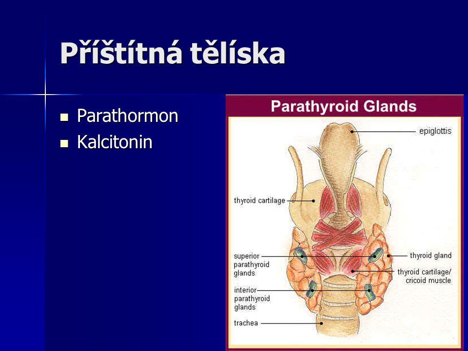 Příštítná tělíska Parathormon Kalcitonin