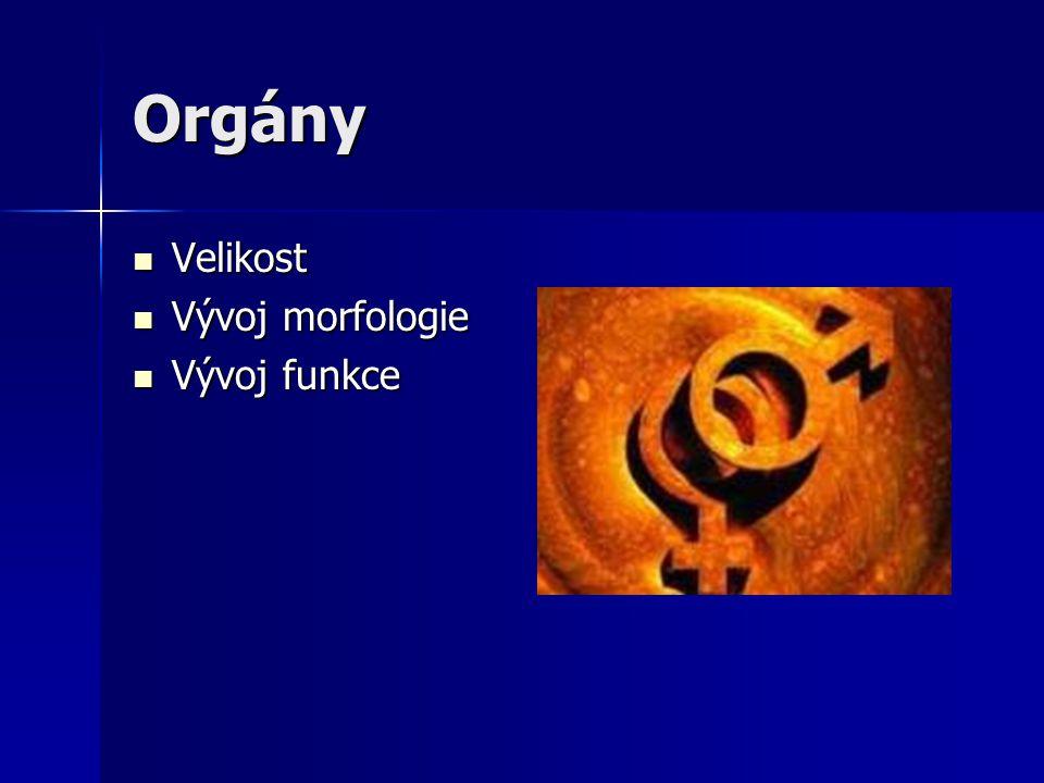 Orgány Velikost Vývoj morfologie Vývoj funkce