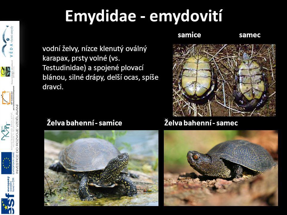 Emydidae - emydovití samice samec