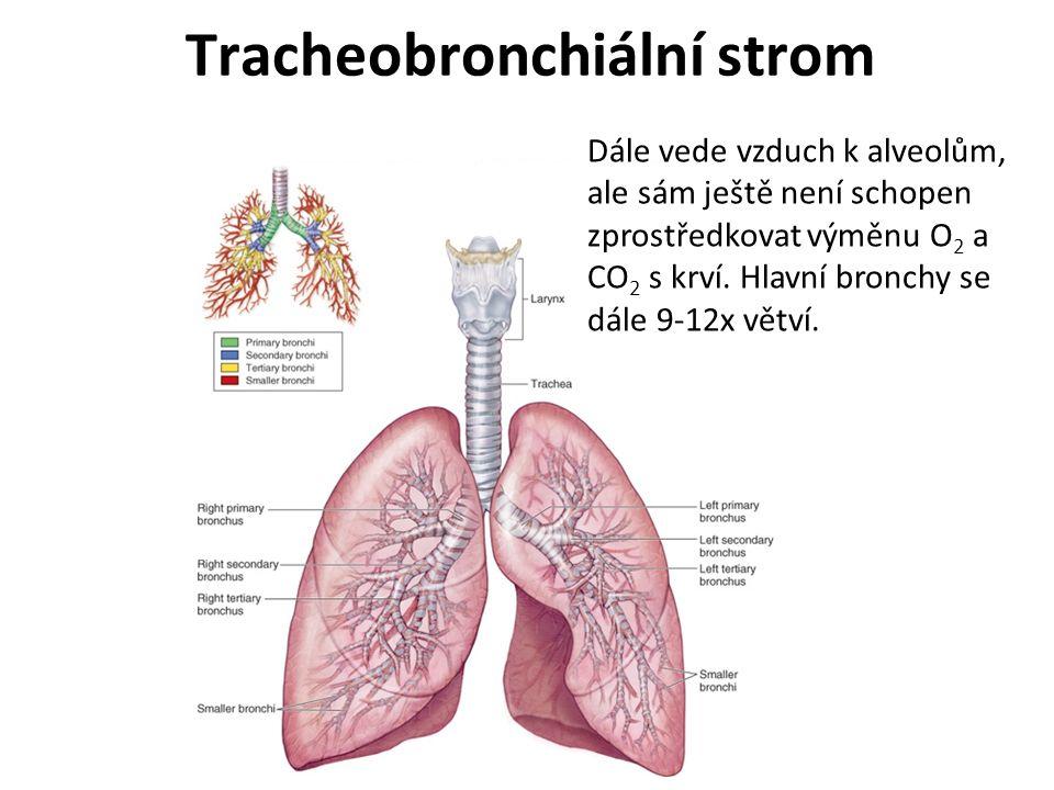 Tracheobronchiální strom