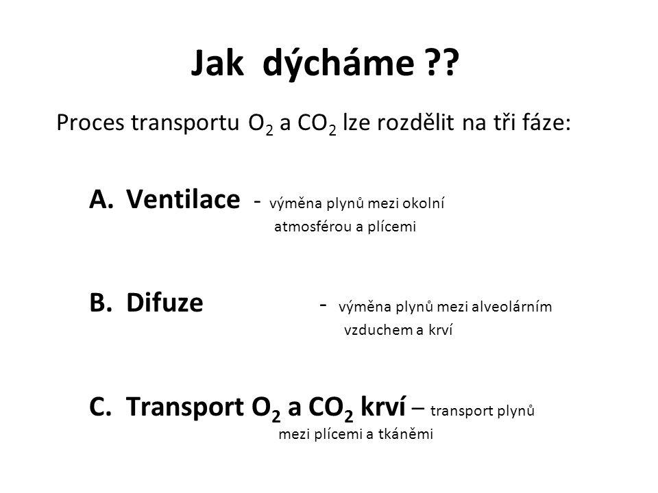 Jak dýcháme Proces transportu O2 a CO2 lze rozdělit na tři fáze: Ventilace - výměna plynů mezi okolní atmosférou a plícemi.