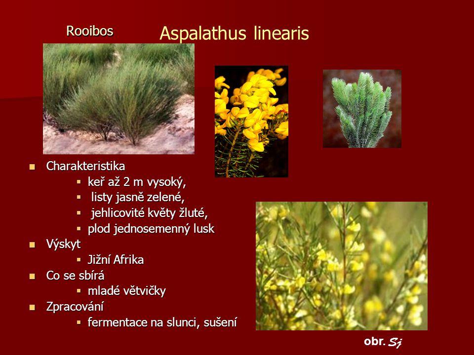 Aspalathus linearis Rooibos Sj Charakteristika keř až 2 m vysoký,