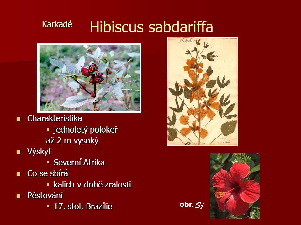 Hibiscus sabdariffa Karkadé Charakteristika jednoletý polokeř