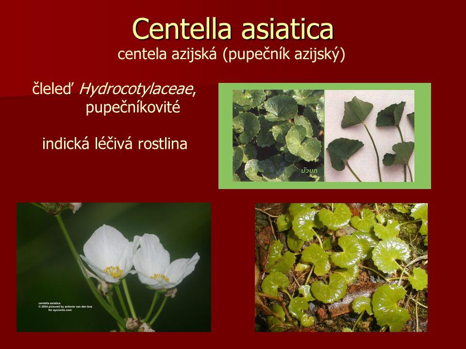 Centella asiatica centela azijská (pupečník azijský)