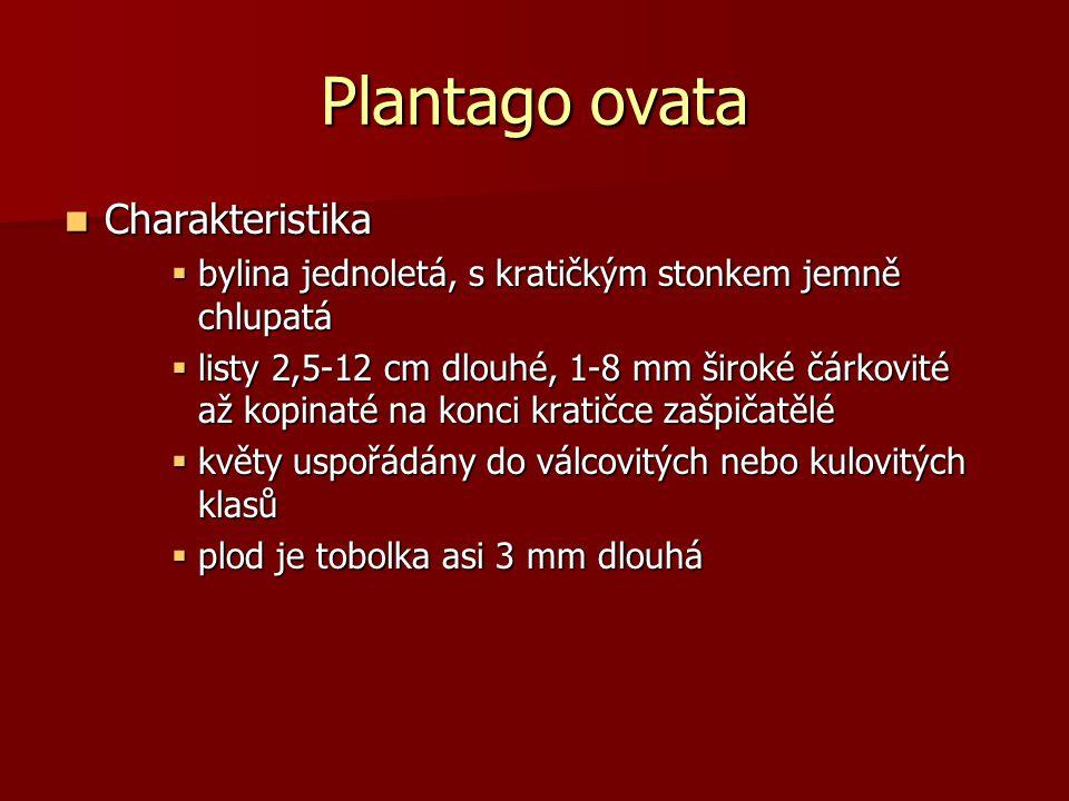 Plantago ovata Charakteristika