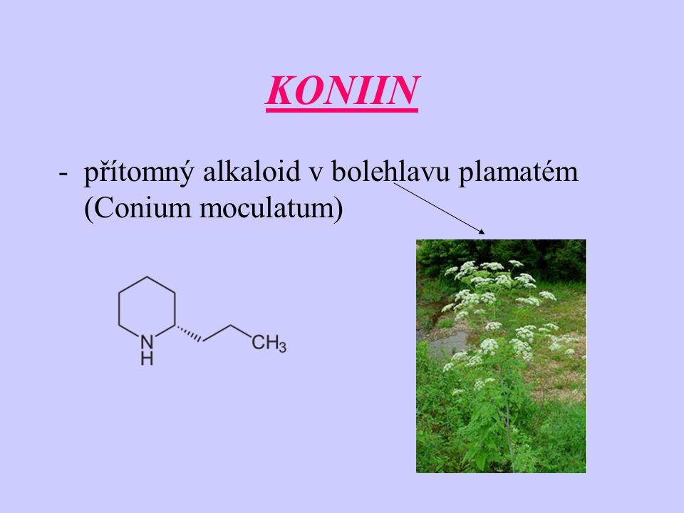 KONIIN přítomný alkaloid v bolehlavu plamatém (Conium moculatum)