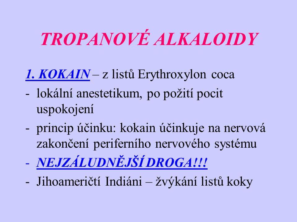 TROPANOVÉ ALKALOIDY 1. KOKAIN – z listů Erythroxylon coca