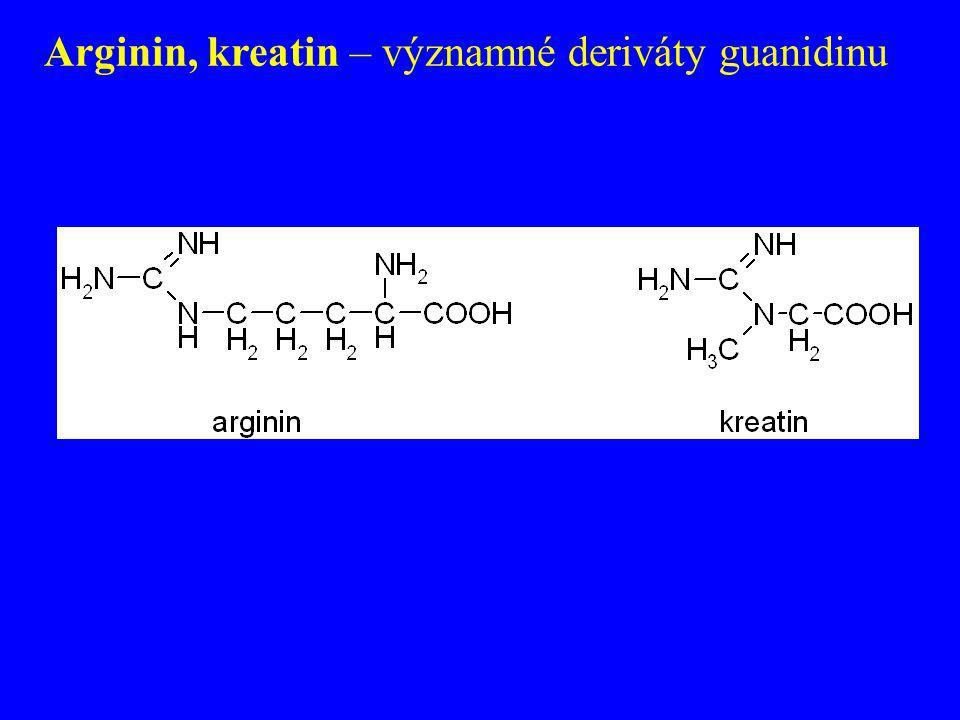 Arginin, kreatin – významné deriváty guanidinu