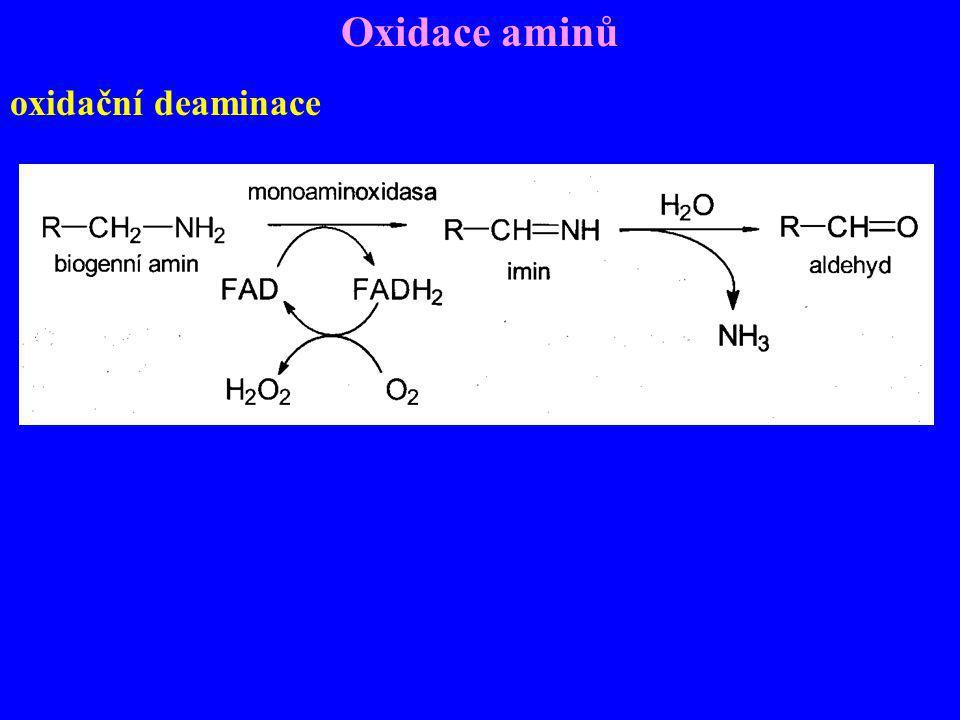 Oxidace aminů oxidační deaminace