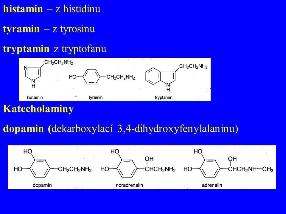 histamin – z histidinu tyramin – z tyrosinu. tryptamin z tryptofanu.