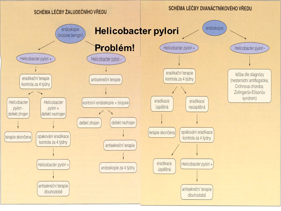 Helicobacter pylori Problém!