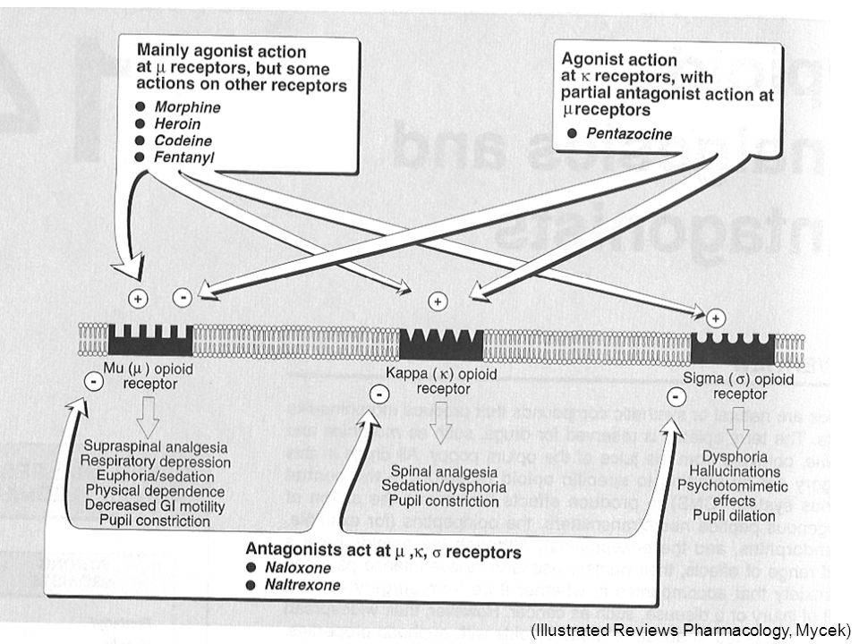 (Illustrated Reviews Pharmacology, Mycek)
