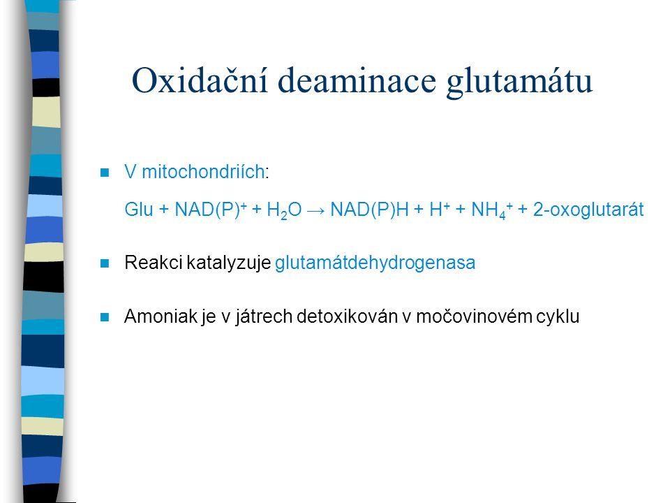Oxidační deaminace glutamátu