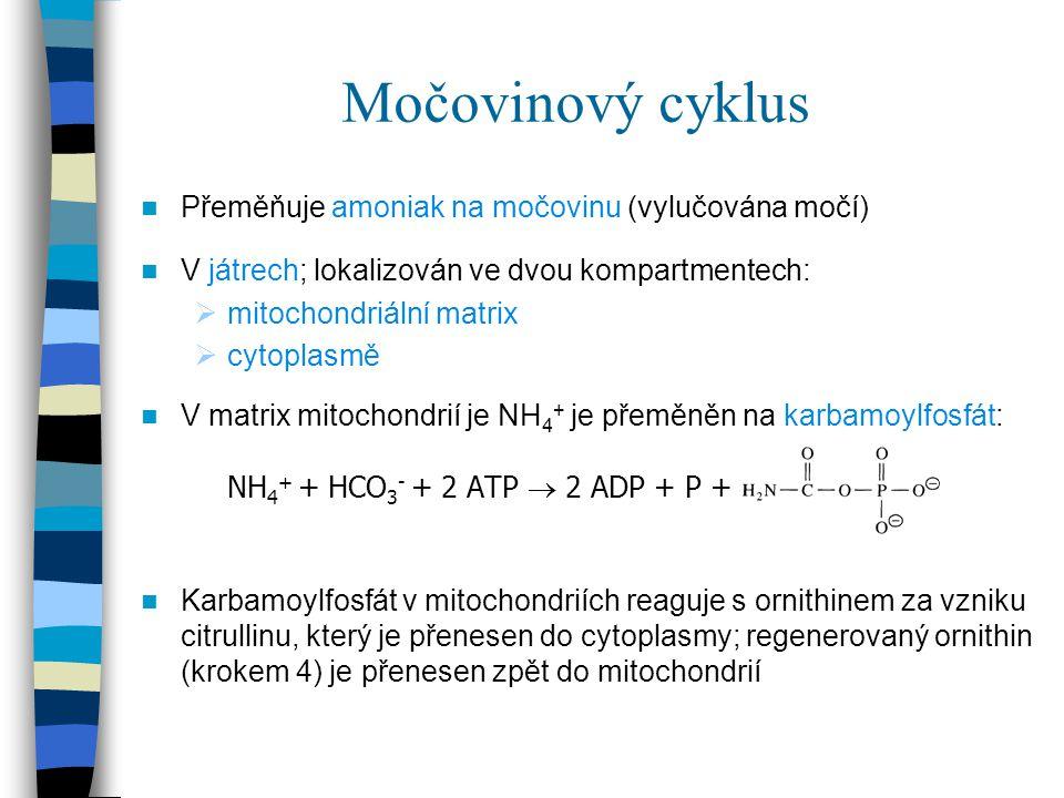Močovinový cyklus Přeměňuje amoniak na močovinu (vylučována močí)