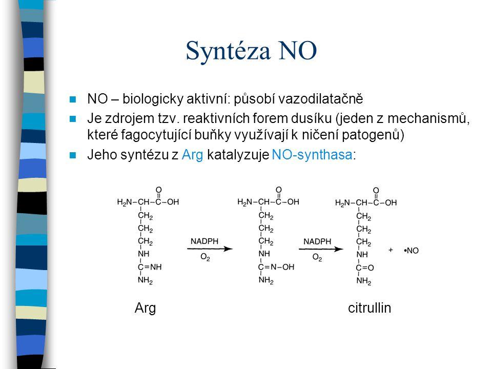 Syntéza NO NO – biologicky aktivní: působí vazodilatačně