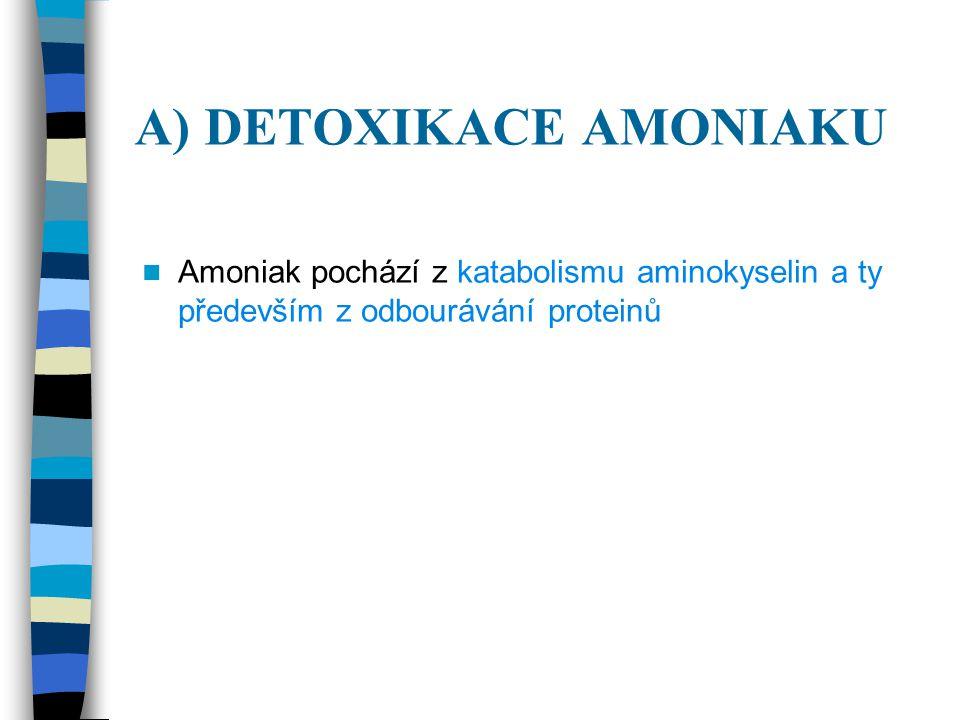 A) DETOXIKACE AMONIAKU