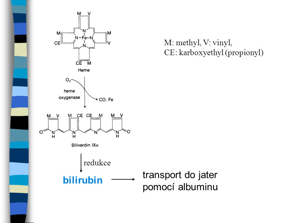 transport do jater bilirubin pomocí albuminu M: methyl, V: vinyl,