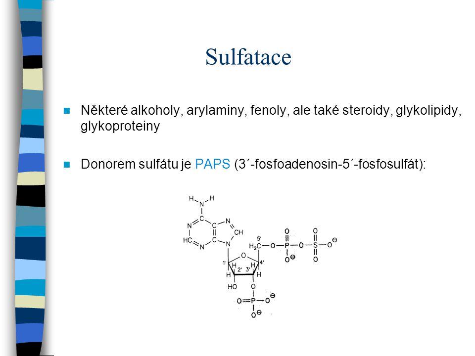 Sulfatace Některé alkoholy, arylaminy, fenoly, ale také steroidy, glykolipidy, glykoproteiny.