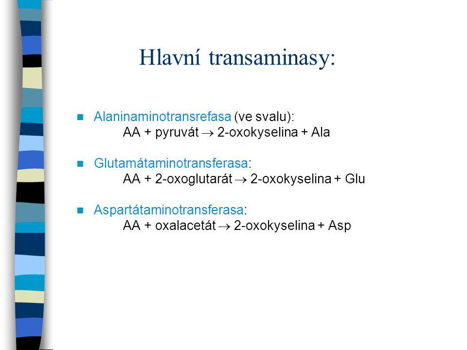 Hlavní transaminasy: Alaninaminotransrefasa (ve svalu):