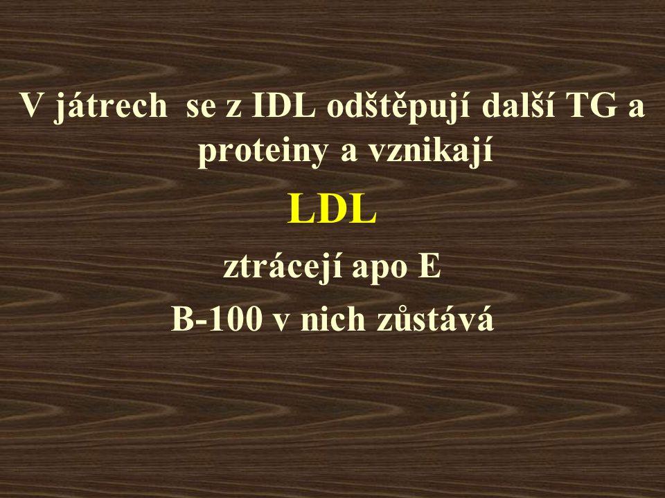 V játrech se z IDL odštěpují další TG a proteiny a vznikají