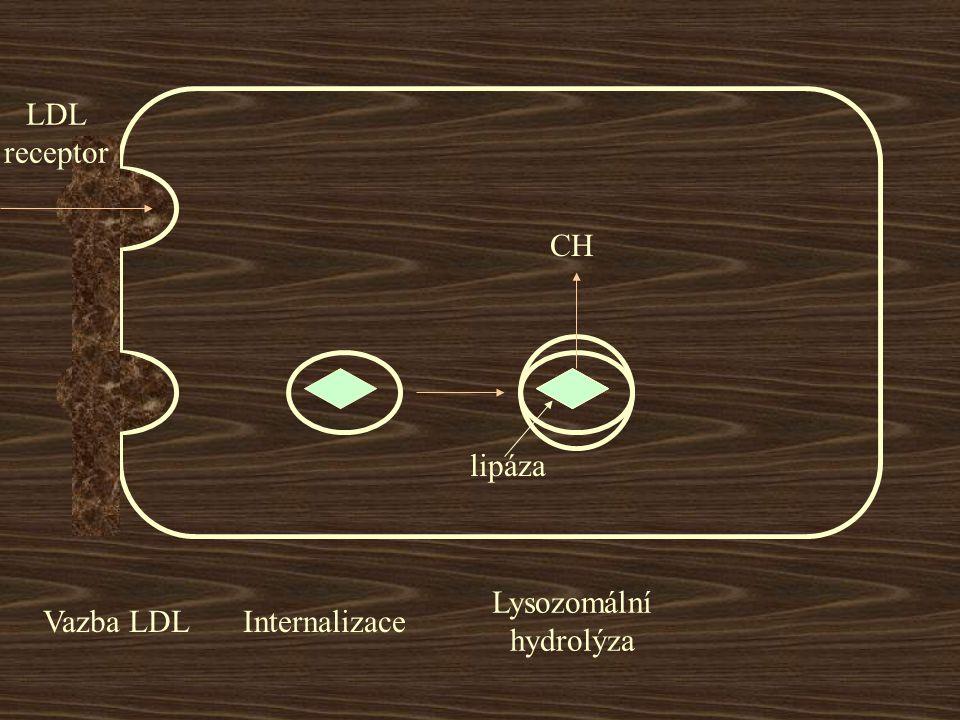 LDL receptor CH lipáza Vazba LDL Internalizace Lysozomální hydrolýza