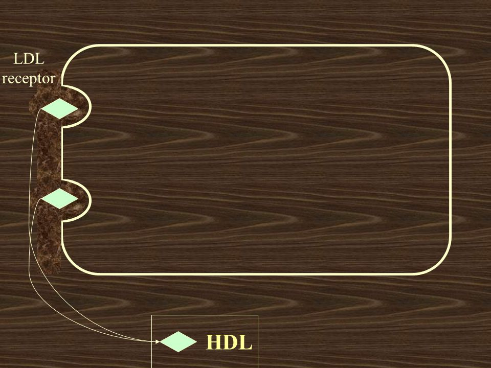 LDL receptor HDL